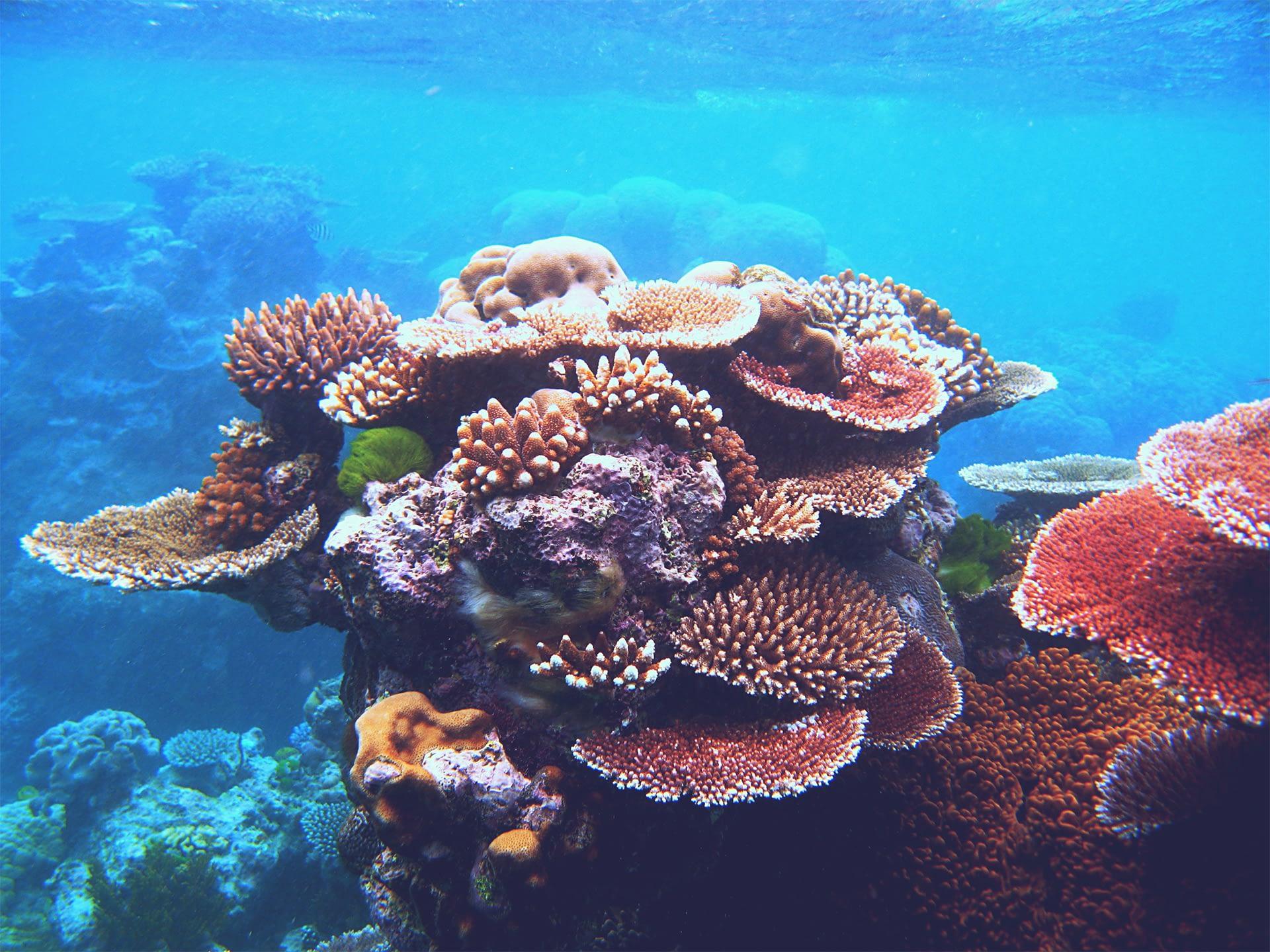 _0042_coral_edit