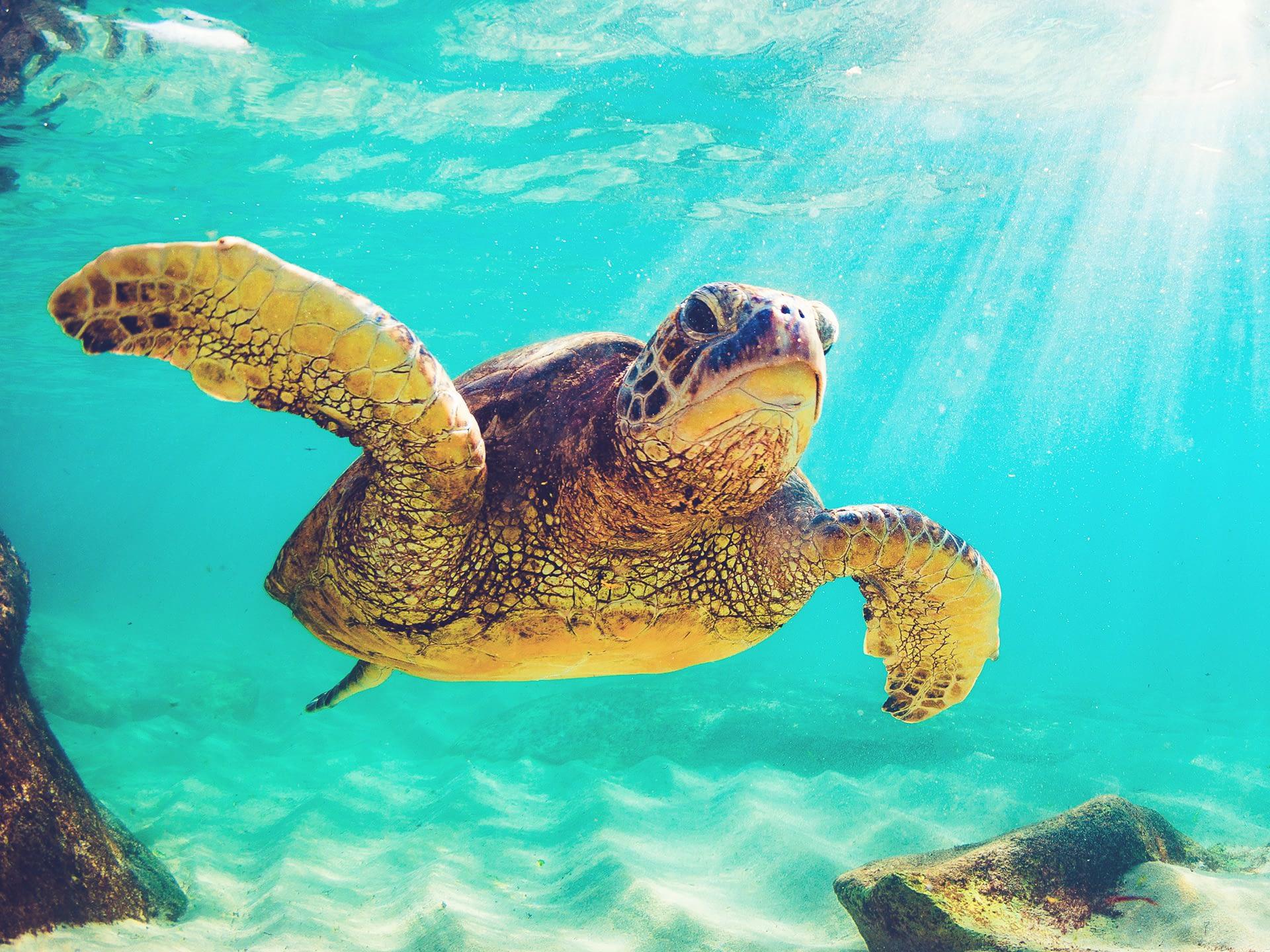 _0015_turtle